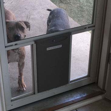 Arlington Dog Door Installation